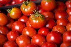 Много красных и зеленых томатов, предпосылка овощи томата серии баклажана огурца Он Стоковое фото RF