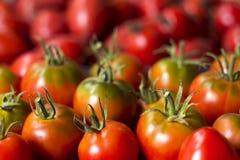 Много красных и зеленых томатов, предпосылка овощи томата серии баклажана огурца Он Стоковое Фото