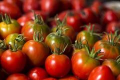 Много красных и зеленых томатов, предпосылка овощи томата серии баклажана огурца Он Стоковая Фотография