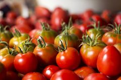 Много красных и зеленых томатов, предпосылка овощи томата серии баклажана огурца Он Стоковое Изображение