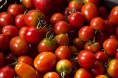 Много красных и зеленых томатов, предпосылка овощи томата серии баклажана огурца Он Стоковое Изображение RF