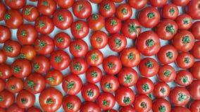 много красных томатов Стоковые Фотографии RF