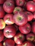 Много красных яблок стоковые фото