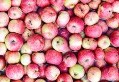 Много красных яблок плавая в воду Стоковые Изображения