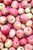 Много красных яблок плавая в воду Стоковое Фото