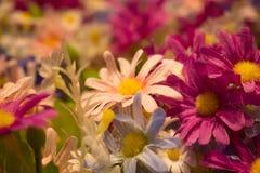 Много красочных цветков хлопко-бумажной ткани на запачканной предпосылке Стоковые Изображения