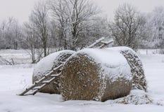 Много круглое сено в лесе зимы, лежа под снегом, сельское земледелие ландшафта стоковое фото rf