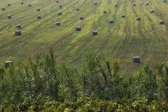 Много круглых связок сена свеже сжали в поле стоковое фото rf