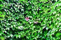 Много листья Стоковые Фотографии RF