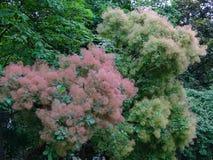 Много малые покрашенные цветки на зеленых ветвях дерева Стоковое фото RF