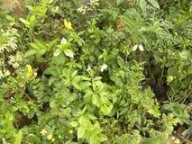 Много малых зеленых растений в саде стоковая фотография rf