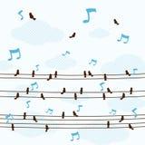 Много маленькие птицы поют песню на линии векторе Стоковое Фото