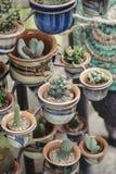 Много малых заводов кактуса на керамических баках Стоковые Фотографии RF