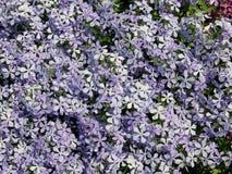 Много малых florets Стоковые Фотографии RF
