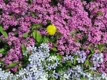 Много малых florets Стоковые Изображения
