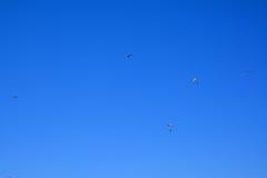 Много малых parachutists в небе Стоковые Изображения