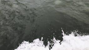 Много медузы на поверхности моря сток-видео