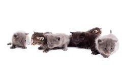 Много милых котят, изолированных на белизне Стоковое фото RF