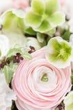 Много наслоенных лепестков Перский лютик Пук бледный - розовый лютик цветет светлая предпосылка обои, вертикальное фото Стоковое Фото