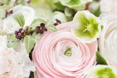 Много наслоенных лепестков Перский лютик Пук бледный - розовый лютик цветет светлая предпосылка обои, горизонтальное фото Стоковая Фотография RF