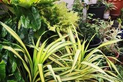 Много орнаментальных заводов красиво аранжированы в саде Стоковые Фотографии RF