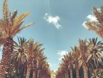 Много пальмы в инфракрасн ` Gan Ha паркуют в Rishon Le Сионе, Израиле стоковые изображения rf