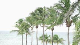 Много пальмы и море сток-видео