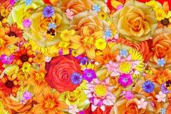 Много предпосылка зацветая цветка просвирника или мальвы и различных цветков абстрактная стоковые изображения