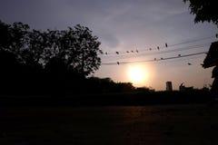Много птица на проводе Стоковое фото RF