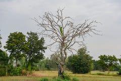 Много птицы на ветви дерева Стоковые Изображения RF