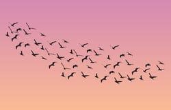 Много птиц летая в небо, серию природы Стоковые Изображения