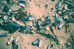 Много пустых seashells Стоковые Фото