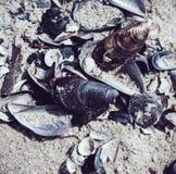 Много пустых seashells Стоковые Фотографии RF
