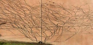 Много пути и сетей лоз Стоковое Изображение RF