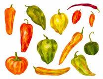 Много различных перцев установите акварель Болгарин, chili, отличается Стоковая Фотография