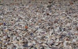 Много различных пустых раковин моря в море Marmara Стоковые Фотографии RF