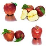 Много различных яблок на белых яблоках без предпосылки, много предпосылки, красных и желтых различных Стоковые Изображения