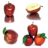 Много различных яблок на белых яблоках без предпосылки, много предпосылки, красных и желтых различных Стоковое Изображение RF