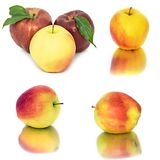 Много различных яблок на белых яблоках без предпосылки, много предпосылки, красных и желтых различных Стоковые Фотографии RF