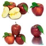 Много различных яблок на белых яблоках без предпосылки, много предпосылки, красных и желтых различных Стоковое Изображение