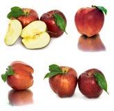 Много различных яблок на белых яблоках без предпосылки, много предпосылки, красных и желтых различных Стоковая Фотография