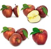 Много различных яблок на белых яблоках без предпосылки, много предпосылки, красных и желтых различных Стоковая Фотография RF