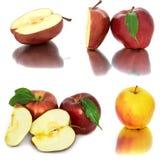 Много различных яблок на белых яблоках без предпосылки, много предпосылки, красных и желтых различных Стоковые Фото