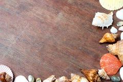много размер раковины моря на древесине Стоковое Изображение