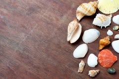 много размер раковины моря на древесине Стоковая Фотография