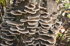 Много-разделенный на зоны грибок Стоковое Изображение