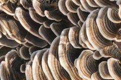 Много-разделенный на зоны грибок Стоковая Фотография