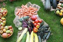 Много различных здоровых овощей в саде на траве Стоковые Фото