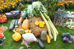 Много различных овощей в саде на шарике сена Стоковое фото RF