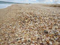 Много раковины на пляже Стоковое Фото